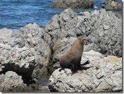 Gay seal?