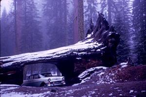 Yosemite, 1964