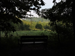 "A bench near the ""Green Trail"""