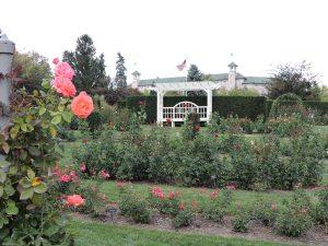 """""""A nice garden of roses"""""""