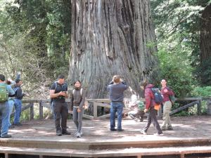 Big Tree: height 320', diameter 21.6', circumfrence 68', 1500 years