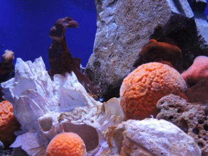 Orange Puffpall Sponge