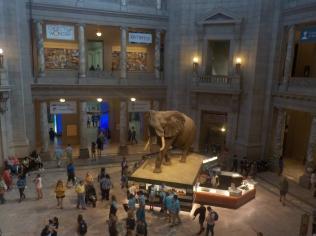 Musuem of Natural History