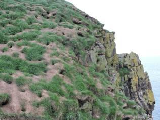 Puffin nests at Hafnarhólmi