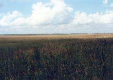 Sawgrass, Everglades, 25 Dec 88