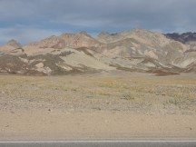 """Death Valley - """"Desert Gold"""" flowers"""