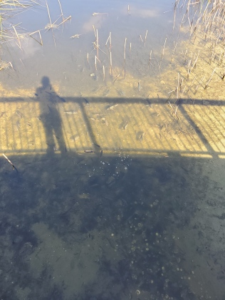 Shadows on the pond