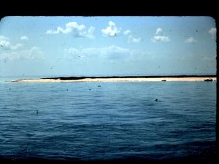 Bird reserve, Hastings Reef