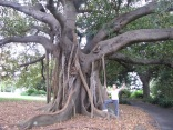Sister-in-law by a Moretown Bay Fig