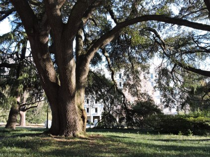 This lovely huge old oak was not even listed on the map of the Capitol grounds.